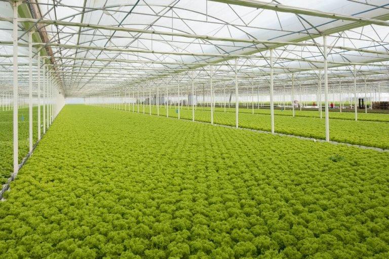 Galpões de lona para o agronegócio: como protegem o seu negócio?